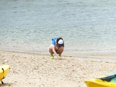浜辺で遊ぶぽんちゃん
