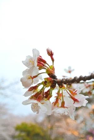福岡城跡3