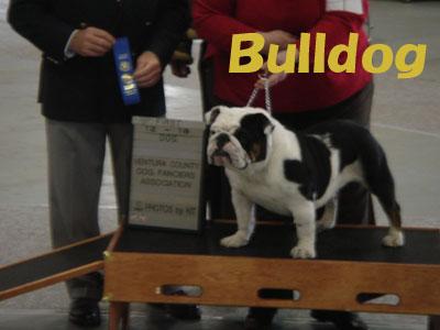 bull winner