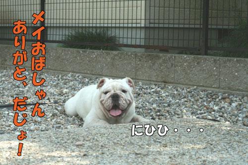 Frenchbulldog5