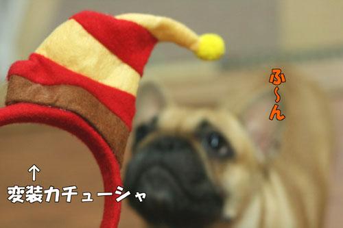 フレンチブルドッグ子犬2