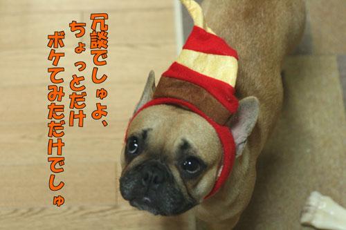 フレンチブルドッグ子犬4