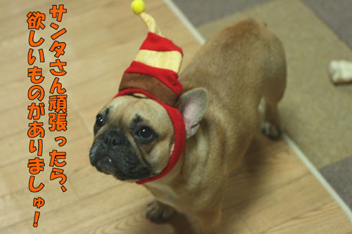 フレンチブルドッグ子犬5