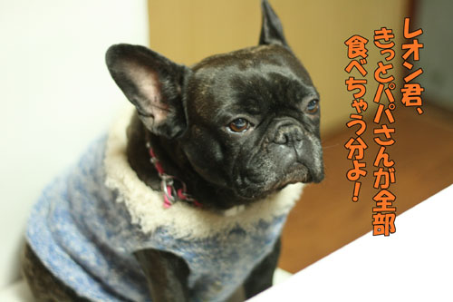 frenchbulldog 5
