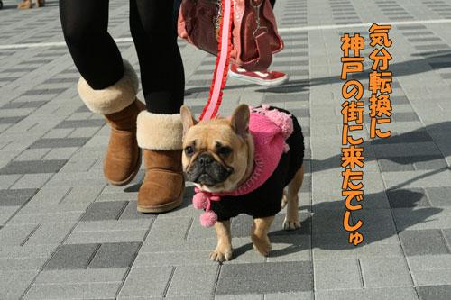 フレンチブルドッグ ドッグショー 1