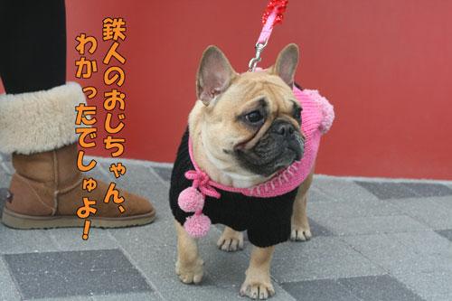 フレンチブルドッグ ドッグショー 8