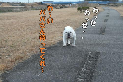 ブルドッグ ドッグショー 1