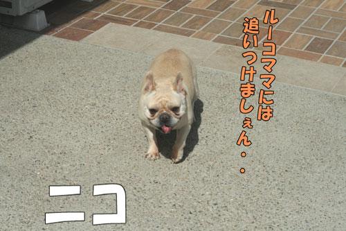 フレンチブルドッグ 3