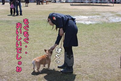 フレンチブルドッグ 子犬 2