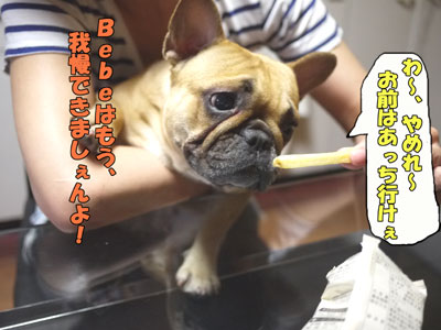 frenchbulldog 4