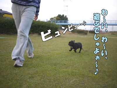 フレンチブルドッグ ドッグショー 4