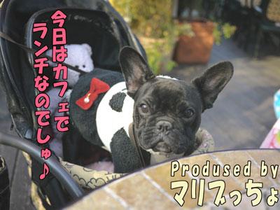 Dogcafe 1