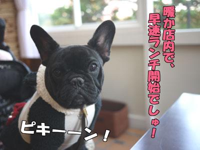Dogcafe 3