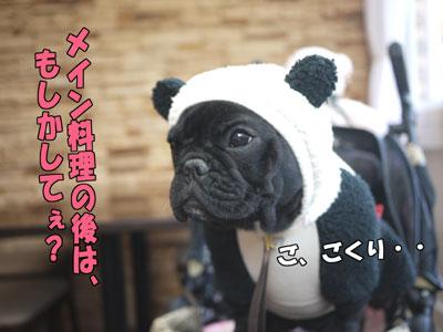 Dogcafe 8
