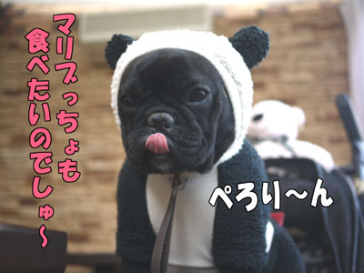 Dogcafe 10