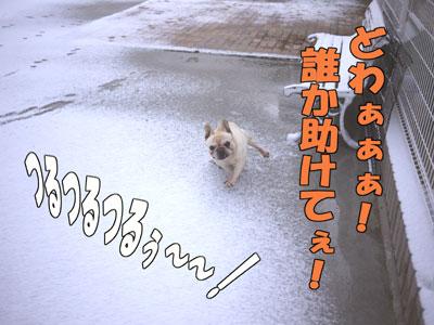 フレンチブルドッグ 4
