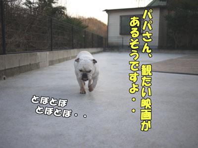 frenchbulldog  1