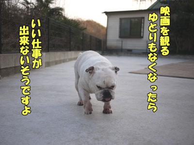 frenchbulldog  2