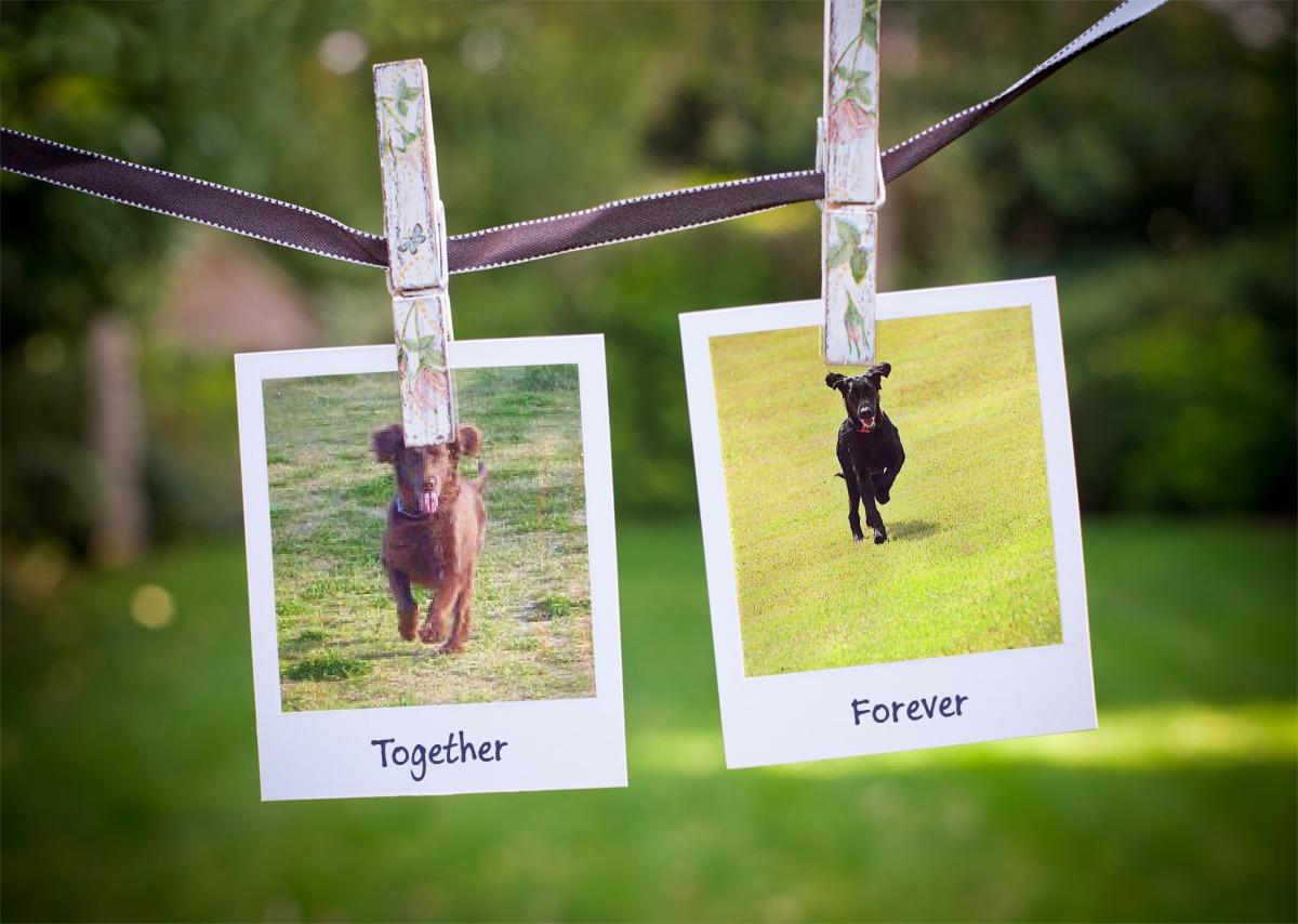 PF_Together_Forever_04072013.jpg