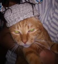 にゃんこ帽子