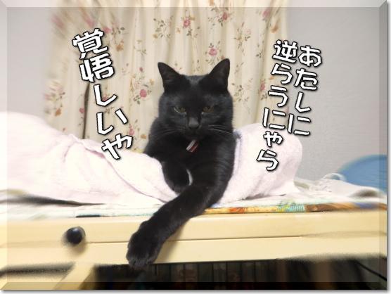 極道の黒猫?