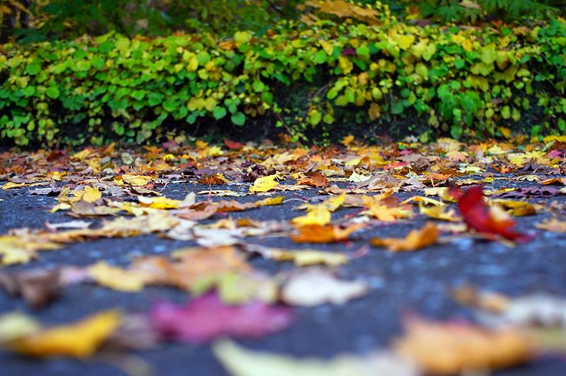 アスファルトの秋