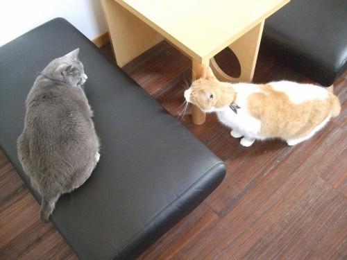 ボスとルパン