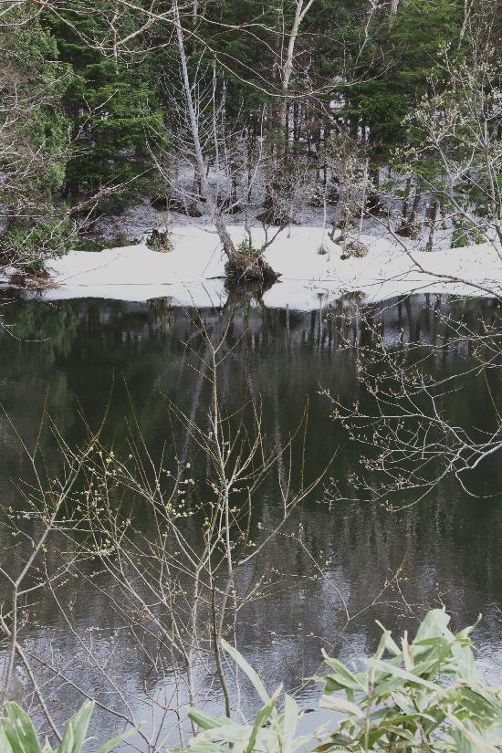 志賀高原-11上の小池-1