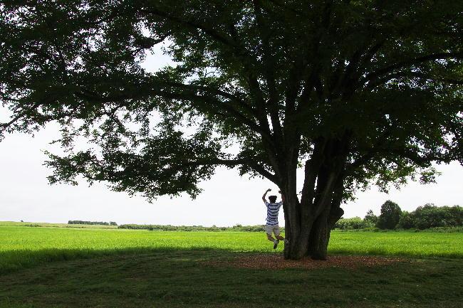 ハルニレの木-2