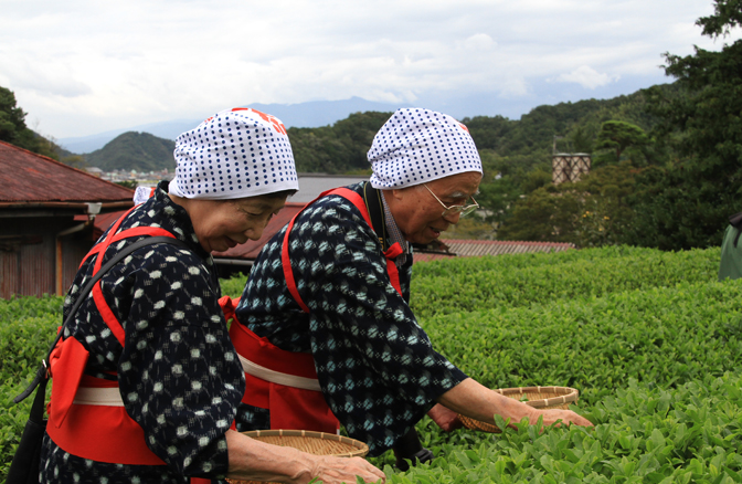 茶摘み婆-049