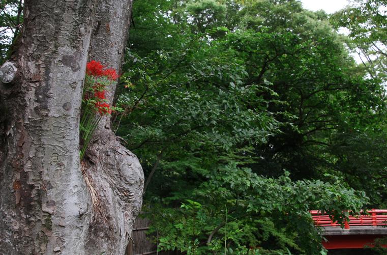 竹林の小径-133-13