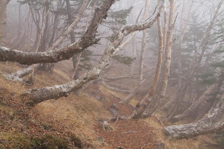 富士山の霧-2