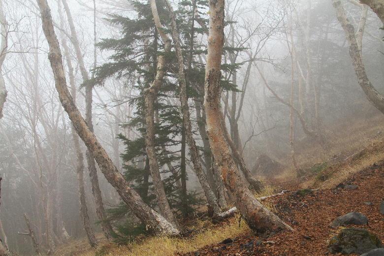 富士山の霧-4