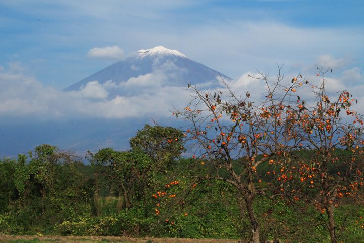 富士山と柿-509-3