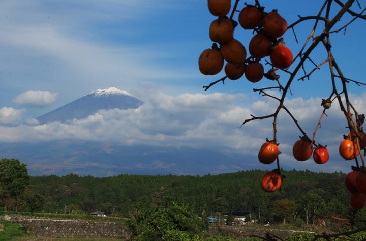 富士山と柿-510-6