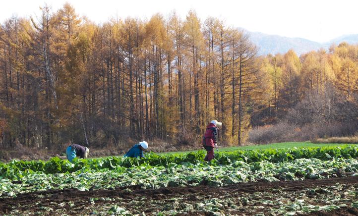 高原の畑-680-2