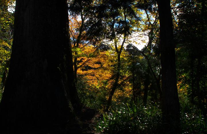 箱根神社-13