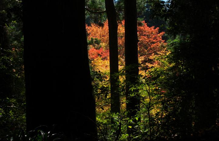 箱根神社-156-1
