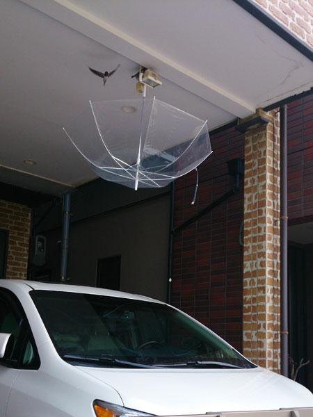20130617ツバメの巣