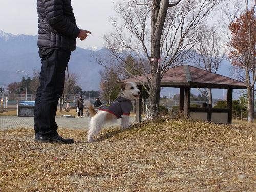 20141116azasa2.jpg