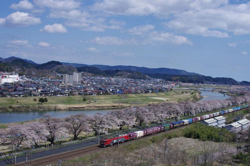 IMGPsakura8-432.jpg