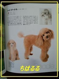 dogbook-poodle.jpg