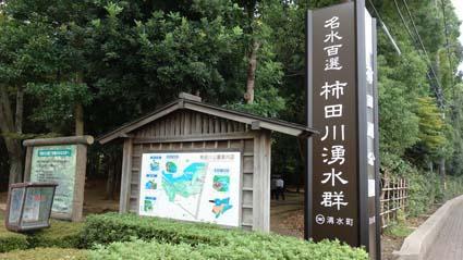 柿田川湧水郡1
