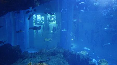 水槽ダイビング1