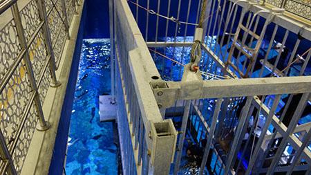 水槽ダイビング7