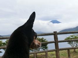 富士山雲にかくれそう~