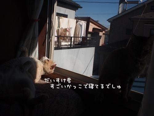 P1195884.jpg