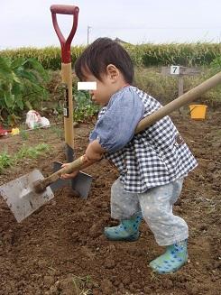 畑を耕す息子