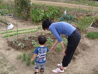 息子にじゃがいもの花を教えている妻