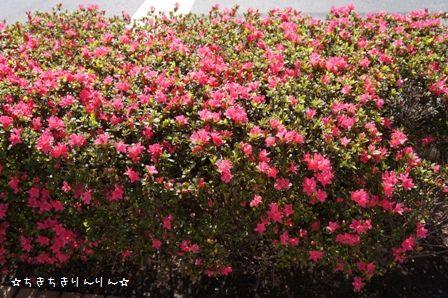 近所のお花①